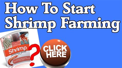 [click]how To Start Shrimp Farming - Shrimp Farming Guide Pdf Ebook Review.